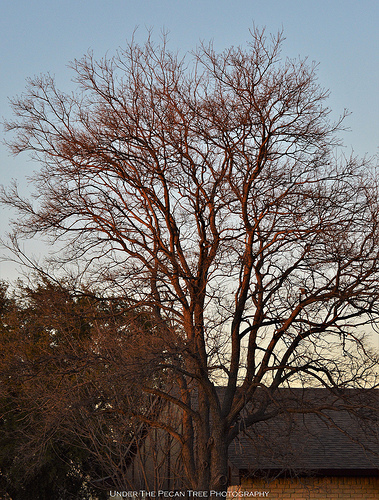 The last rays of the sun reflect on the neighbor's tree.