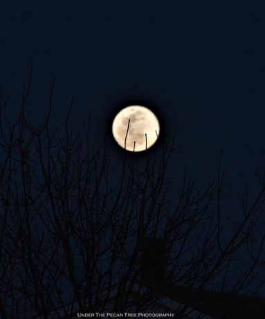 "The Moon is ""resting"" on the tree."