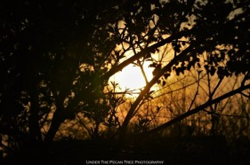 Sunset Tree Silhouette I