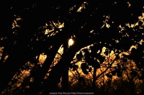Sunset Tree Silhouette II