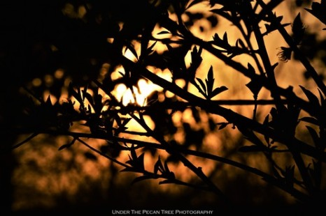 Sunset Tree Silhouette III