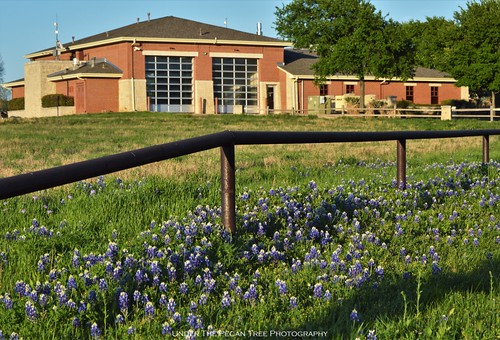 Bluebonnets in front of the Plano Fire Station #9
