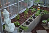 The peppers and more herbs are planted in the left greenhouse raised bed.