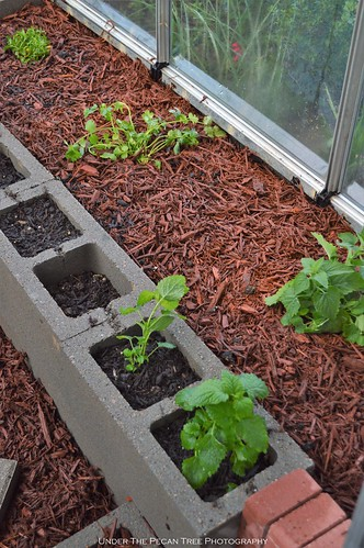 The right greenhouse raised bed has herbs and still needs some more plants.
