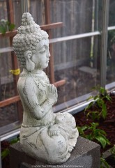 I've placed the stone Buddha in the greenhouse.