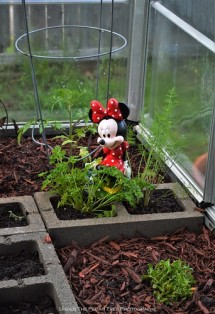 Minnie loves all the herbs in the greenhouse. She can't wait, until they begin to bloom and bring some pollinators.