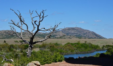 From the Jed Johnson Tower, the Wichita Mountains chain can be seen with Mount Scott, which is the highest peak of the refuge.