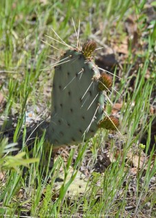 Another prickly cactus