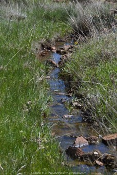 In Spring, the streams are running along the trails.