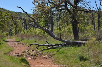 Fallen tree at the Jed Johnson trail