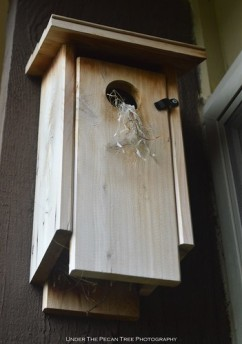 We have a Bewick's Wren building a nest in the birdhouse in front of Katelynn's bedroom window.