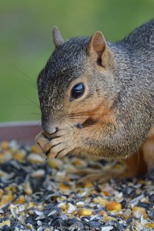 """This sunflower seed is delicious!"""
