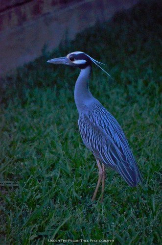 ..., and struts on our front lawn.