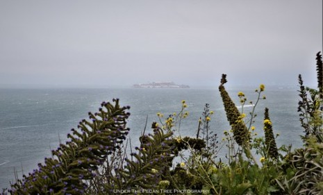 Alcatraz Island is covered in mist,