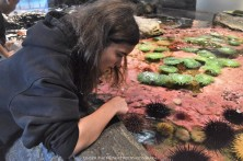 Katelynn plays with the sea urchins, sea anemones, sea cucumbers, and other interesting sea creatures.