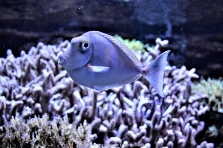 A friendly fish, because it smiled into my camera :D