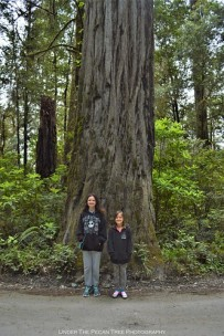 Katelynn and Sara in front of a Redwood tree