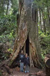 Katelynn and Sara in the Redwood forest