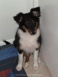 Lexi as a pup, when we first got her. (February 2005)