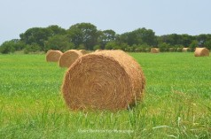 The hay bales dry in the Summer.