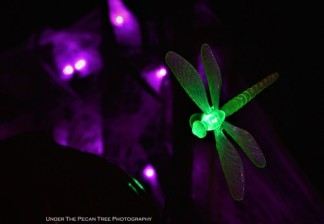 The garden light dragonfly is ready for Halloween.