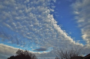 Autumn Stratocumulus Clouds I