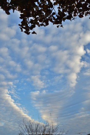 Autumn Stratocumulus Clouds II