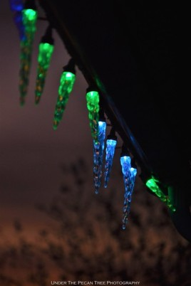 The Christmas light icicles after tonight's sunset