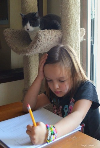 Back in 2016, Finley made sure that Sara does her homework. He also believes in 'First work, then play'. Sara had to practice her numbers from 1-100. The Kindergarden days are not like as they used to be.