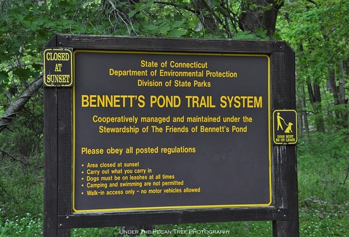 The Bennett's Pond Trail System is a part of the Ives Trail, which is another 20 mile-trail system between Danbury, Redding and Bethel.