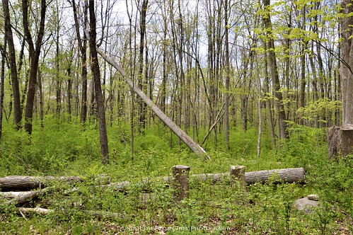 This would make nice firewood. But the wildlife needs its habitats as well.